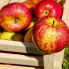 Benefits Of 3 Day Apple Diet
