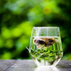Is Green Tea Good For Your Skin?