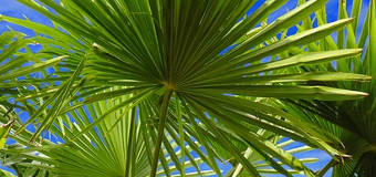 Saw Palmetto Benefits For Oily Skin And Acne